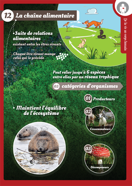 12 chaine alimentaire
