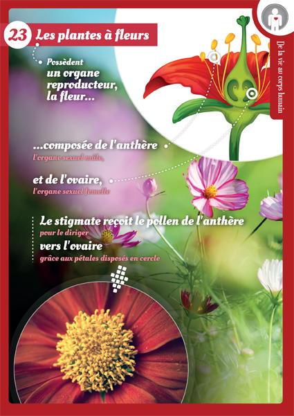 23 plantes a fleurs