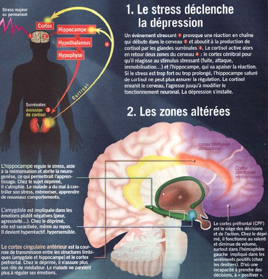 Stress et mémoire ne font pas bon ménage