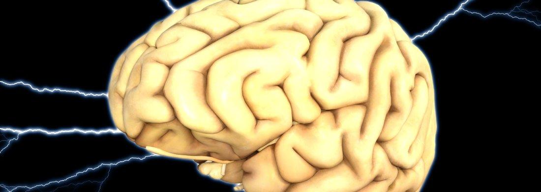 Pourquoi le cerveau est-il plissé ?