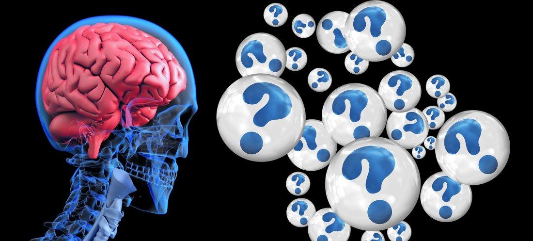 Les connexions neuronales se réorganisent en continue : votre cerveau est plastique