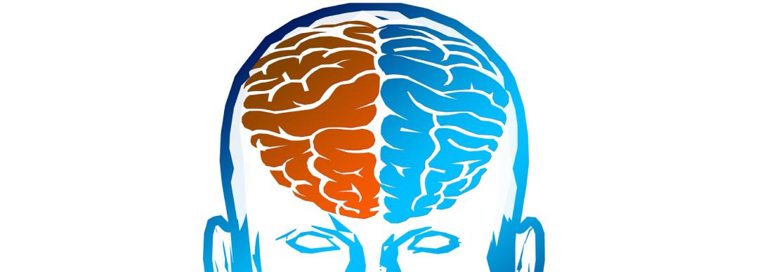 Pourquoi le cerveau est-il composé de deux hémisphères cérébraux ?