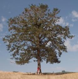Votre cerveau est une immense arborescence