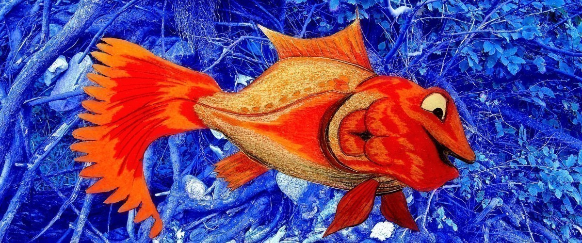 A l'expression mémoire de poisson rouge, je préfère celle-ci : heureux comme un poisson dans l'eau