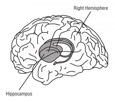 Le rôle de l'hippocampe est avéré