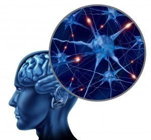neurone cerveau